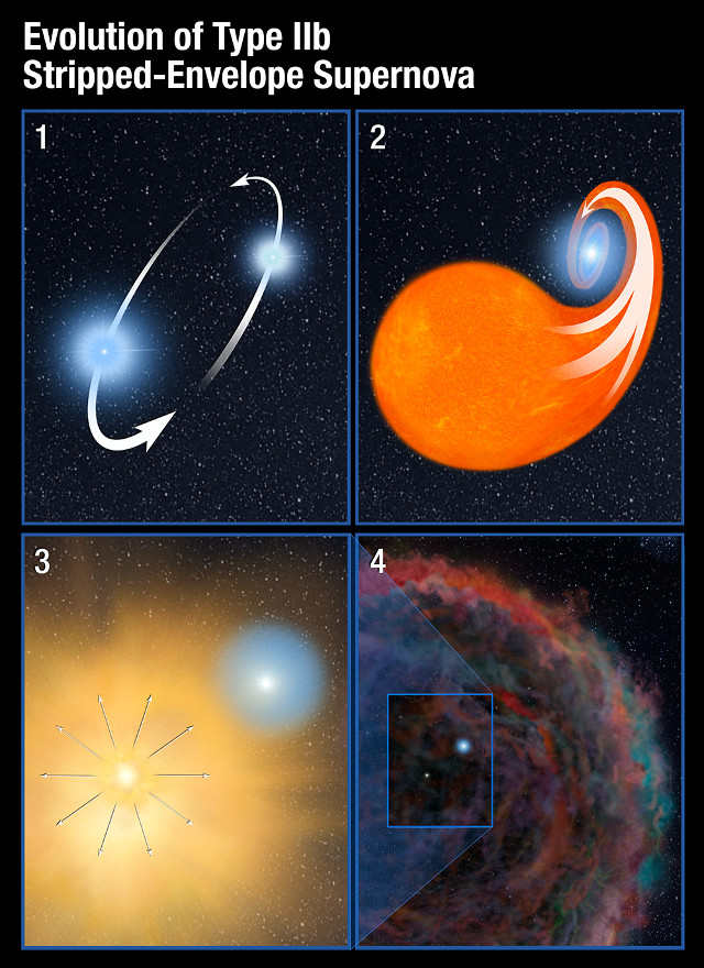 Stages of a type IIb supernova
